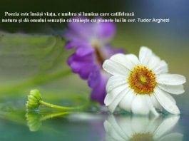 Trilulilu-Psalmi
