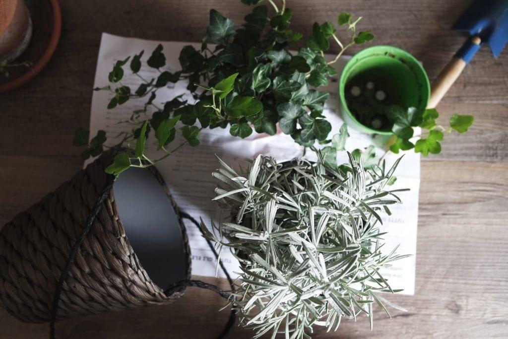 stimularea pancreasului cu plante