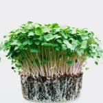 creson planta 1