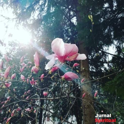 bacovia primăvara