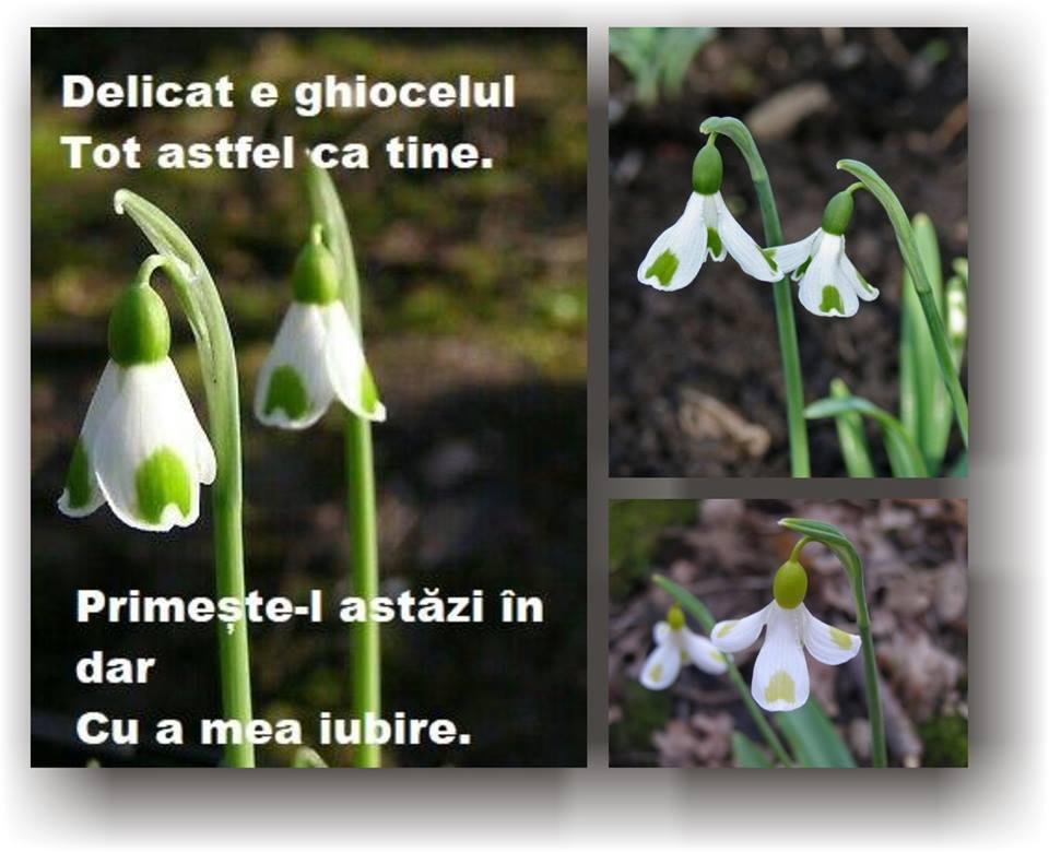 ghiocel 2