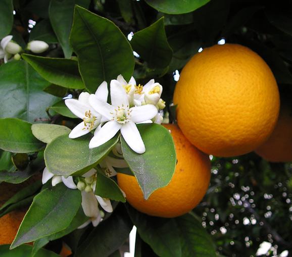 portocala 2