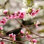 flowering trees 4126540 960 720