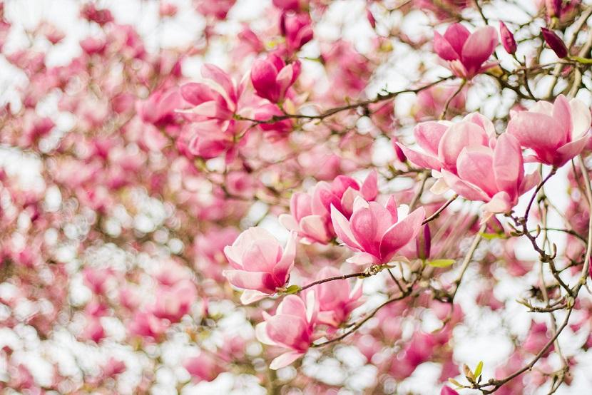 primăvara 2
