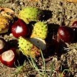 chestnuts 3702654 960 720 1