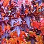 leaves 1769813 960 720