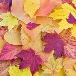 autumn leaves 1789665 960 720