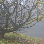 fog 337730 1280