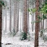 woods 690257 960 720