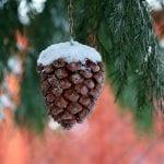 pine cone 3912667 1280